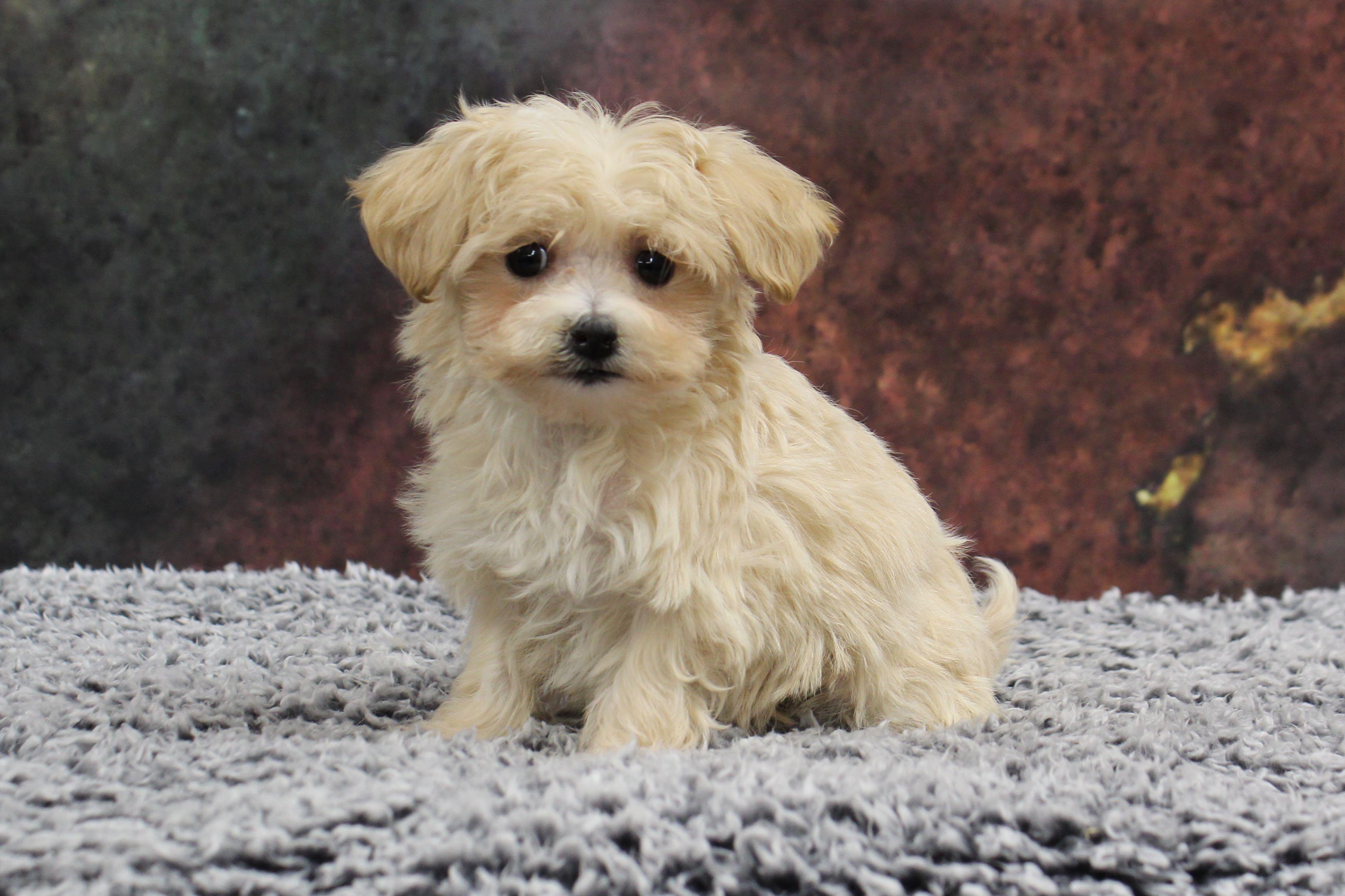 Puppies For Sale A Maze N Farmyard